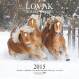 Lovak - Horses - Pferde